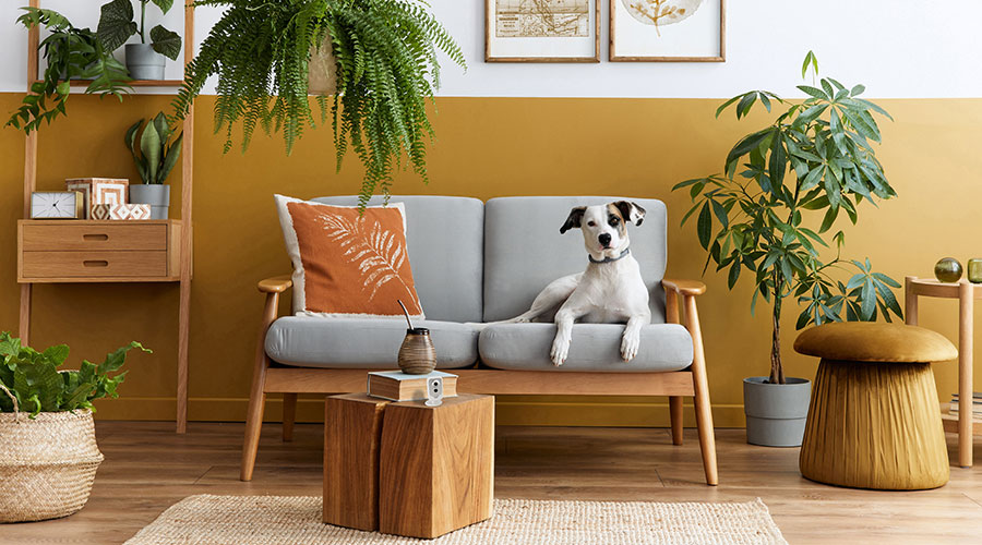 House plants and groomed dog
